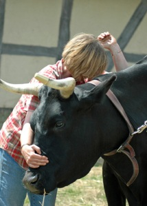 Releasing Tension in an Oxen Shoulder
